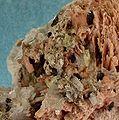 Serandite-Leucophanite-Polylithionite-162982.jpg