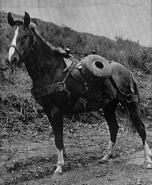 Military animal - Pictured with a reel of communication wire, Sergeant Reckless was a highly decorated US Marine Corps artillery horse in the Korean War.