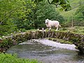 Sheep on a small bridge near Wasdale Head. - geograph.org.uk - 1052052.jpg