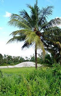 Pallippuram, Alappuzha Village in Kerala, India