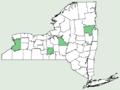 Silphium perfoliatum var perfoliatum NY-dist-map.png
