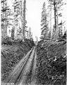 Skid road, Wynooche Timber Company, near Montesano, ca 1921 (KINSEY 1617).jpeg