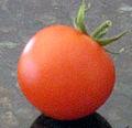 Small Cherry Tomato.jpg