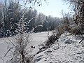 Small Flocked Tree Next to Frozen River - panoramio.jpg