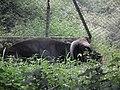 Snap from Bannerghatta National Park Bangalore 8639.JPG
