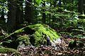 Soft light in the wood (21170483115).jpg