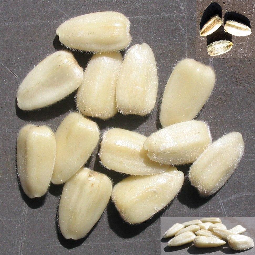 Sonnenblumenkerne sunflower seeds