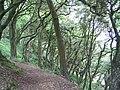 South west Coast Path through oak woodland on Toll point - geograph.org.uk - 187222.jpg