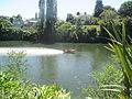 Speedboats on the Waikato River, Hamilton 01.JPG