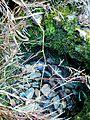 Spider web in a natural rock depression.jpg
