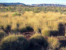 Spinifex Savanna Central Australia.jpg