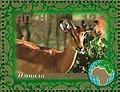 Stamp of Abkhazia - 2007 - Colnect 1010915 - Impala.jpeg
