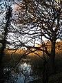 Stanley Marsh Nature Reserve - geograph.org.uk - 1052918.jpg