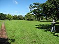 Starr-091104-0783-Artocarpus sericicarpus-habit with Forest-Kahanu Gardens NTBG Kaeleku Hana-Maui (24619964139).jpg