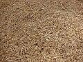 Starr 080210-2734 Eragrostis variabilis.jpg