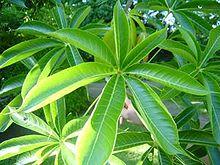 Unisexual flowers wikipedia plants