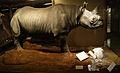Stolen Rhinoceros horn 1.jpg