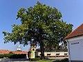 Stollhofen - Pestkreuz mit Regierungs-Jubiläums-Eiche.jpg