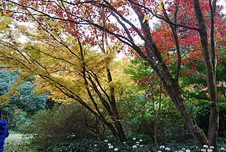 Autumn foliage in May Sydney Autumn.JPG