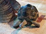 Szkola pod zaglami Nausicaä Centre National de la Mer turtle.jpg