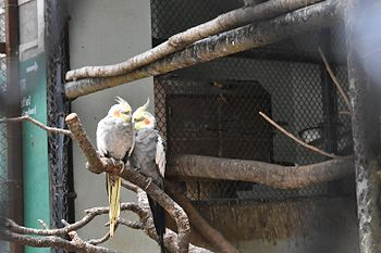 THE LOVE IN THE CAGE.jpg