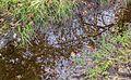 Takken spiegelen zich in een waterplas op het pad. Locatie, het Katlijker Schar (Ketliker Skar).jpg