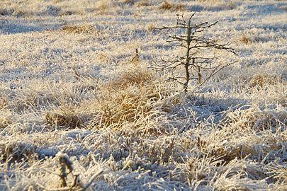 Talv Kõnnu Suursoos3.jpg