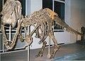 Tarbosaurus - Copenhagen.jpg