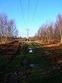 Telephone Lines, Limekiln Forest - geograph.org.uk - 316721.jpg