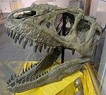 Teratophoneus skull BYU.jpg