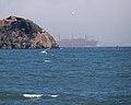 Tern diving (40314).jpg