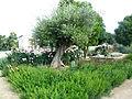Terra Botanica 01.jpg