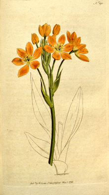The Botanical Magazine, Plate 190 (Volume 6, 1793).png