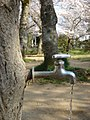 The Faucet in the Stump 2.jpg