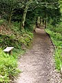 The Footpath to the south of Staindale Lake - geograph.org.uk - 1318024.jpg