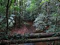 The Pipeline at Rio Mendoza - Flickr - treegrow.jpg