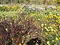 The TNU Botanical Garden in Simferopol, Crimea, Ukraine 37.jpg