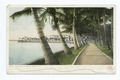 The Walk, Palm Beach, Fla (NYPL b12647398-62380).tiff