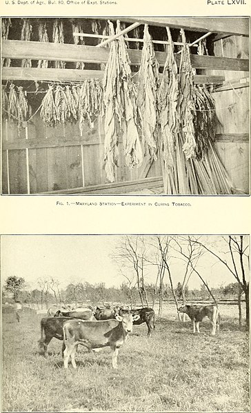 File:The agricultural experiment stations in the United States (1900) (14779920404).jpg