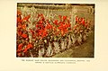 The book of hardy flowers (Plate 86) (6465818639).jpg