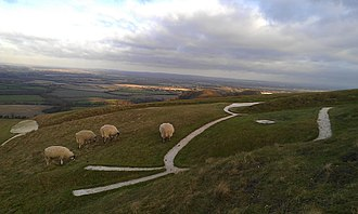 Uffington White Horse - The head of the horse, with sheep grazing around it.
