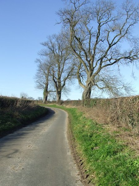 File:Three trees - geograph.org.uk - 686996.jpg