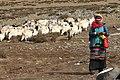 Tibetan shepherd girl.jpg