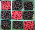 Tic-tac-toe berries.jpg