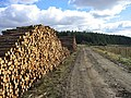 Timber storage, Kielder Forest - geograph.org.uk - 1224078.jpg