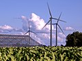 Tobacco and Turbines.jpg