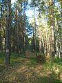 Tomsky District, Tomsk Oblast, Russia - panoramio (160).jpg
