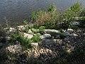 Topělecký rybník, konstrukce hráze.jpg