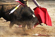 Bullfighting - France - ESDAW
