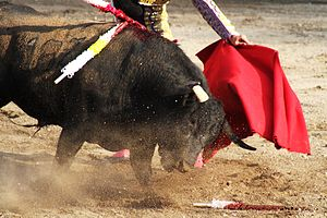 Spanish-style bullfighting - Weakened by the picador
